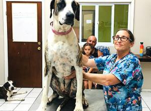 Dr. Melissa Shaw and a very large dog