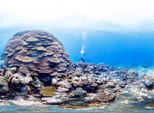 Big Momma coral reef