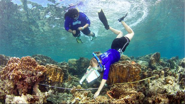 During the QUEST session offered over the spring break, ASCC students Saelia Holmgren (foreground) and Claudia Thompson work together to measure the amount of relief in the reef, a metric known as rugosity.  [Courtesy Photo]