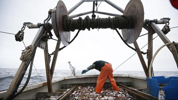 Industrialization hasn't made fishing more efficient. (AP Photo/Robert F. Bukaty)