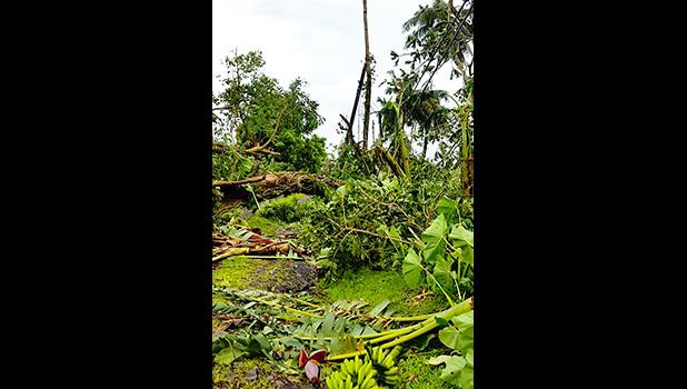 A family in Ili'ili learned after Tropical Storm Gita moved away last Friday afternoon that all kinds of trees blocked their access road and the trees also took down power lines to their house. As of yesterday, the family still has no electricity but is very thankful that there were no injuries or deaths in the two Samoas.  [courtesy photo]