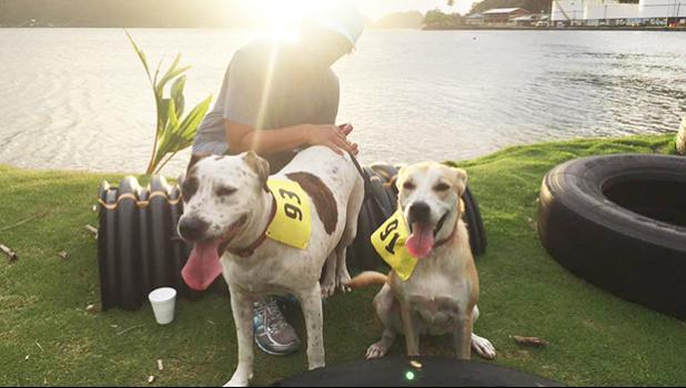 These two canine runners participated in the 5k and 14k Heart N Sole fun run hosted by SPW last Saturday.  [photo: TG]