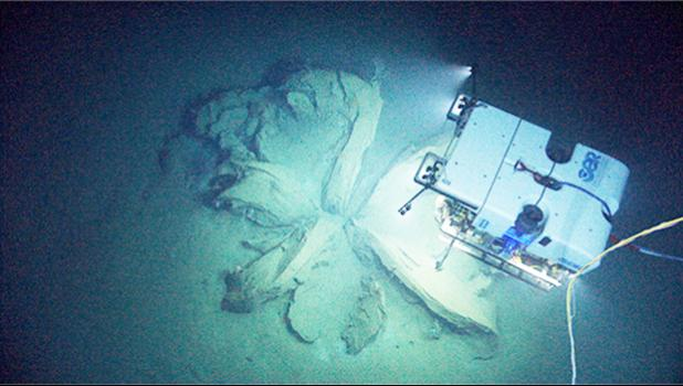 "During a dive on sonar anomalies suspected to be a shipwreck, the Deep Discoverer remotely operated vehicle instead discovered the remnants of asphalt volcanoes, or ""tar lilies."" Image courtesy of NOAA Office of Ocean Exploration and Research, Okeanos Explorer Gulf of Mexico 2014 Expedition.[photo: NOAA website]"