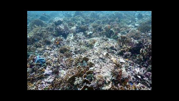 An example of coral bleaching. [SN file photo]