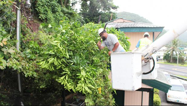 ASPA crew members clearing tree branches that fell on top of lines behind Samoa News