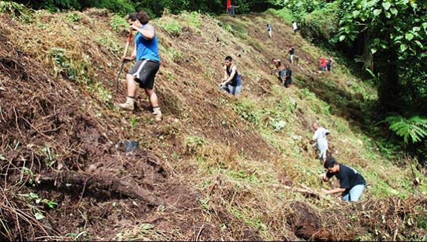 In this Samoa News file photo, National Park crew works on reforestation on the Mt. Alava Trail. [SN file photo]