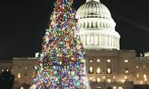 The Capitol Christmas Tree (from Montana this year) as pictured the evening of December 21st. [courtesy photo]