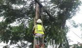 lineman climbing power pole