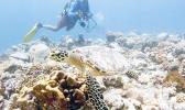 Sam Purkis dives near a hawksbill turtle