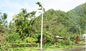This is the scene along the Nu'uuli/Airport road where fallen banana trees along with large broken branches from trees sit on top of electric wires last Saturday morning. There were similar scenes at other areas of Tutuila impacted by Tropical Storm Gita. [photo: FS]
