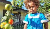 A child inspects tomatoes