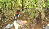 An easy, everyday action people can take to protect mangroves is to place litter/rubbish in covered trashcans and dumpsters so it doesn't get washed down streams into mangrove wetlands. Also, keep on the lookout for people filling in mangroves with dirt or rubbish and report the crime to the Department of Commerce.   [Photo: NPAS]