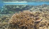 Coral reef at Ofu.