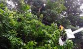 ASPA crew members clearing tree branches that fell on top of primary lines in Alofau village,