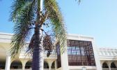 Samoa Court building