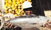 Fisherman holding a skipjack tuna